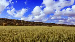 Wheat field with beautiful cloulds timelapse 4k Stock Footage