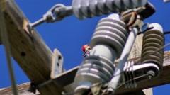 Woodpecker on top of power line pole, 4K Stock Footage