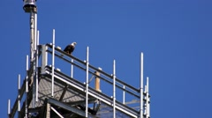 Bald Eagle perched on radio tower, 4K Stock Footage