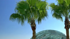 Channelside palm trees and glass building, 4K Stock Footage