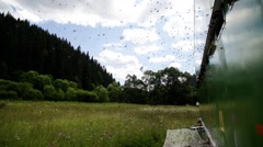Bee swarm in alpine meadow - stock footage