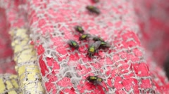 A swarm of flies lay activities in waste plastic sheet - stock footage