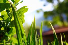 green leaves and grass - stock photo