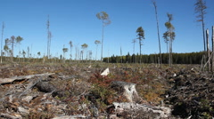 Clear cut land in Northern Ontario. Stock Footage