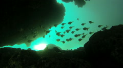 Shoal of sweepers with reflected light swimming in slow motion between rocks Stock Footage