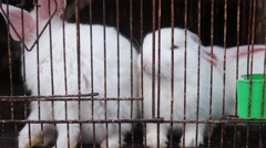 White rabbit in a cage, it is so cute Stock Footage