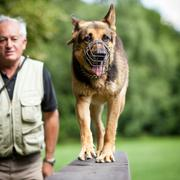 Master and his obedient (German shepherd) dog at a dog training - stock photo