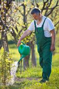 Watering orchard/garden - portrait of a senior man gardening in Stock Photos