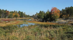 Autumn creek. Fall colours with calm autumn creek. Stock Footage