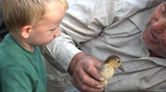 Lesson about love, grandson looking at granfather holding baby bird - stock footage