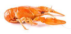 Cooked crayfish close-up Stock Photos