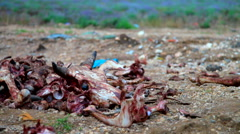 Illegal dumping of organic wast from meat factory Stock Footage