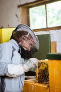 Beekeeper working in an apiary holding a frame of honeycomb cove - stock photo