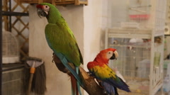 Exotic birds in a store Stock Footage