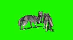 Wolves eat - with and without shadow 4 Stock Footage