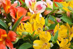 Beautiful bouquet of colorful flowers (Alstroemeria) - stock photo