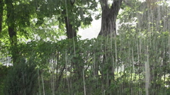Amazing strong rain shower fall refresh trees and creeper park - stock footage