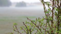 Bush with morning fog Stock Footage