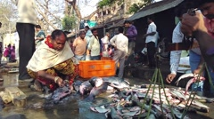 Fish Market and processing of raw fish Stock Footage