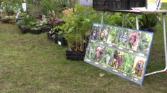 Trade berry, garden plant, sapling, shrub at annual fair Stock Footage