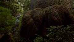 Woman Takes A Photograph Of A Giant Tree In The Pacific Northwest Stock Footage