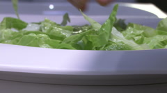 Female hands checking lettuce  Stock Footage