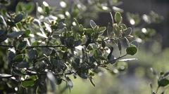 Branch bush Stock Footage