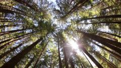 Forest nature sky sunlight slider dolly - stock footage