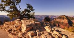 4K Grand Canyon North Rim 04 Tilt Up Cape Royal Stock Footage
