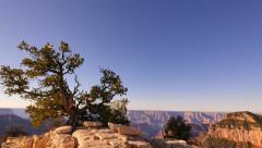 4K Grand Canyon North Rim 05 Tilt Down Cape Royal Stock Footage