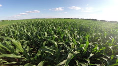 Aerial flight over corn filed - stock footage