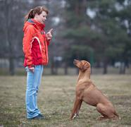 Master and her obedient (rhodesian ridgeback) dog Stock Photos