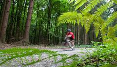 Mountain biking in a forest - biker on a forest biking trail goi Stock Photos