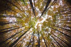 Autumn forest treetops Stock Photos