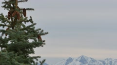 Tree with mountains Stock Footage