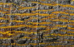 Wood texture with yellow stripes Stock Photos
