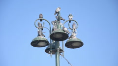 City birds, pigeons are settle on an electric pole Stock Footage