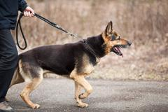 Master and his obedient (German Shepherd) dog Stock Photos