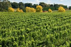Vineyard Scene Stock Photos