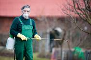 Using chemicals in the garden/orchard: gardener applying an inse Stock Photos