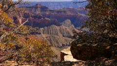 4K Grand Canyon North Rim 10 Tilt Up Stock Footage