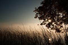 Moody morning at lakeside - stock photo