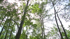 Big stones in the forest Stock Footage