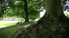 The old tree in the Glastonbury abbey Stock Footage