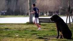 Sleepy dog looks runners at park Stock Footage