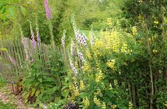 Brittany, le Jardin Lepage in Pleumeur Bodou - stock photo