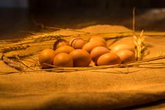 Eggs in the nest Stock Photos