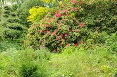 France, le Jardin de l Atelier in Perros Guirec - stock photo