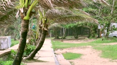 Palms in the wind in Phuket Stock Footage
