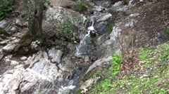 Placerita waterfalls small fall and pool slow pan do Stock Footage